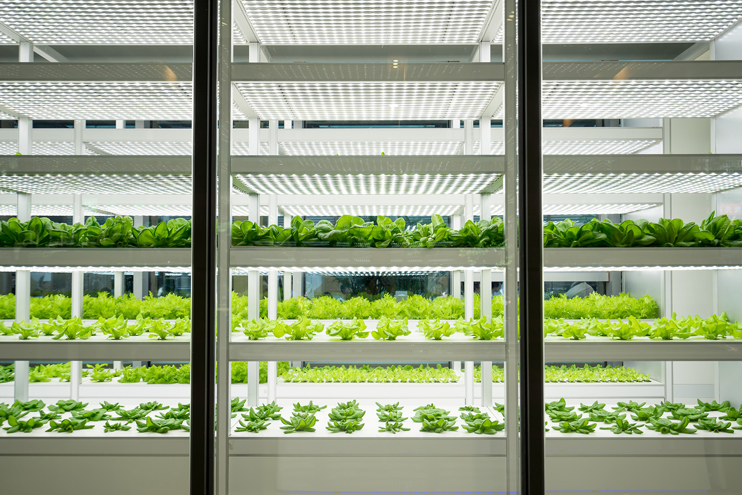 Vegetable farm, vertical farming, could be used for Aerofarms?